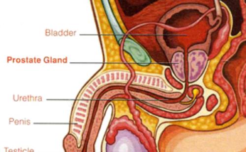 prostate-img